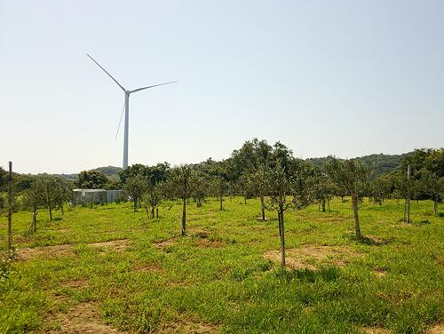 風車の横のオリーブ畑